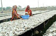 বৈরী আবহাওয়া: সুন্দরবনে কমেছে শুঁটকি উৎপাদন, রাজস্ব আয়ে টান