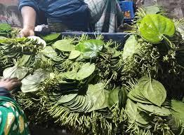 কপিলমুনিতে জমজমাট হচ্ছে পান বাজার, চাষীরা দেখছেন আশার আলো