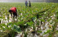 সফলতার গল্প: শুভ-সুরেশ্বরের সোনার হরিণ এখন 'সবজিচাষ'