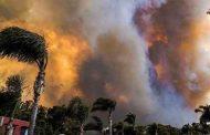 'অস্ট্রেলিয়ার ৭৫ শতাংশ লোক দাবানলে ক্ষতিগ্রস্ত'
