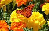 বসন্তের হাতছানি: শীতের সিগ্ধতায় বাহারী ফুল