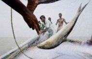 ইলিশ আহরণে শীর্ষে বাংলাদেশ