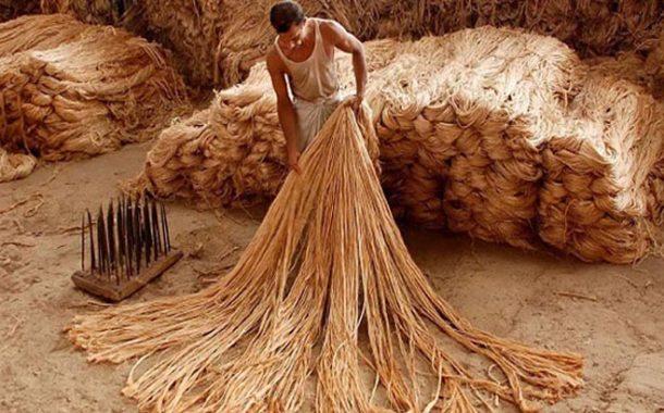 কম দামে মজুদ পাট বিক্রির চুক্তি করে বেকায়দায় বিজেএমসি
