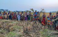 মোংলায় ধান চাষে নারী কৃষকদের ভাগ্য বদলে দিয়েছেন লজিক