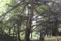 দেবহাটায় শতবছরের ঐতিহ্যবাহী বটগাছটি ঘিরে গড়ে উঠতে পারে পর্যটন শিল্প