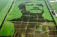 গিনেস রেকর্ড গড়ল 'শস্যচিত্রে বঙ্গবন্ধু'
