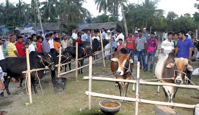 কেসিসি'র কোরবানির পশুর হাট উদ্বোধন আজ