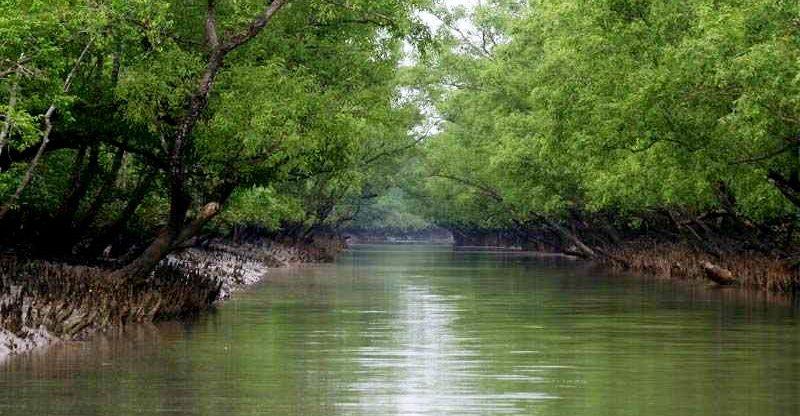 সুন্দরবনে মাছ শিকারে কীটনাশক, হুমকিতে জীববৈচিত্র্য
