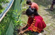 মধুরাপুরে ম্যানগ্রোভ গাছ লাগালেই শিশুরা পাচ্ছে পুষ্ঠিকর খাবার