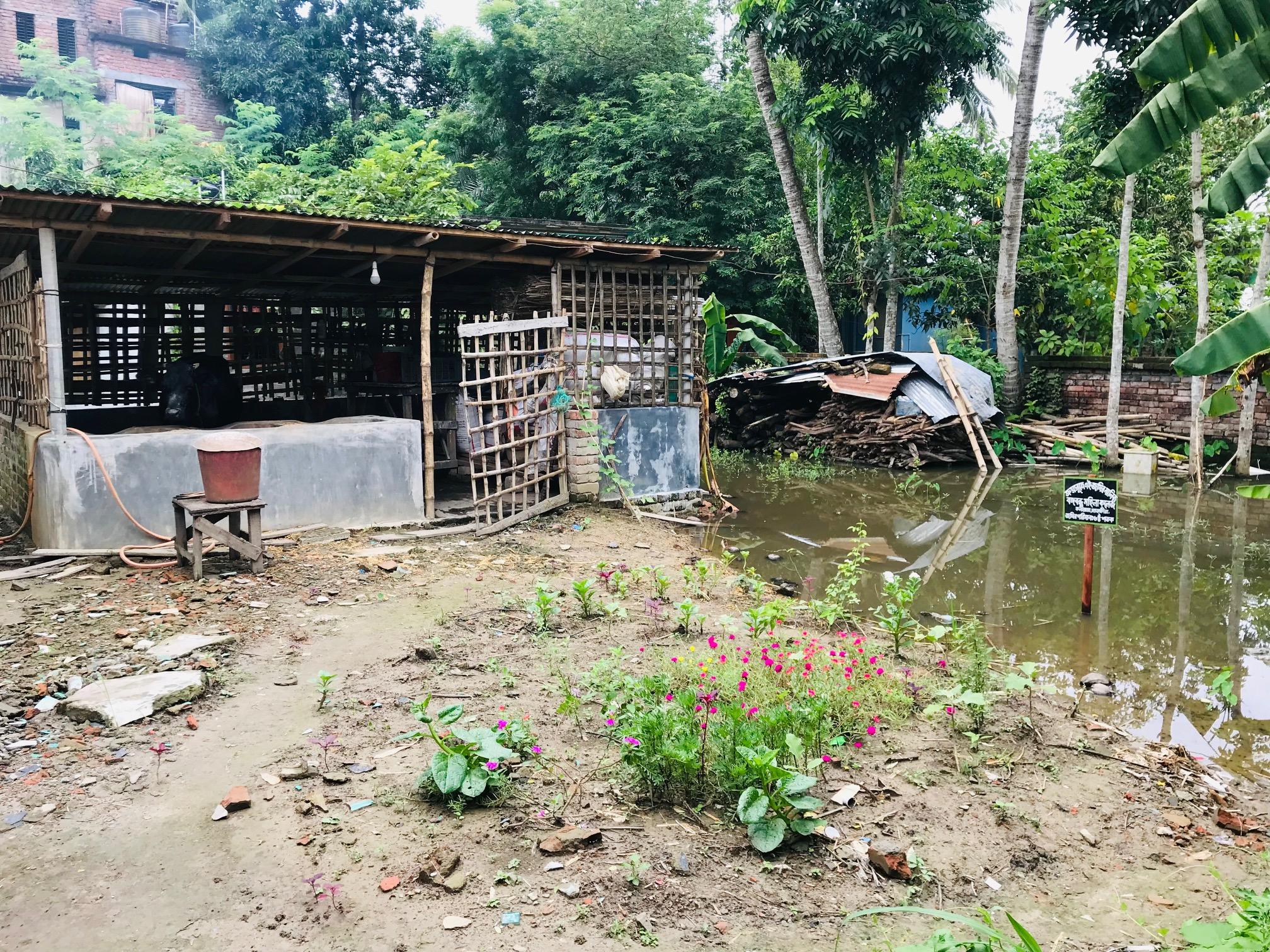 কলারোয়া মহিলা ডিগ্রী কলেজের জমিতে গোয়ালঘর নির্মাণ