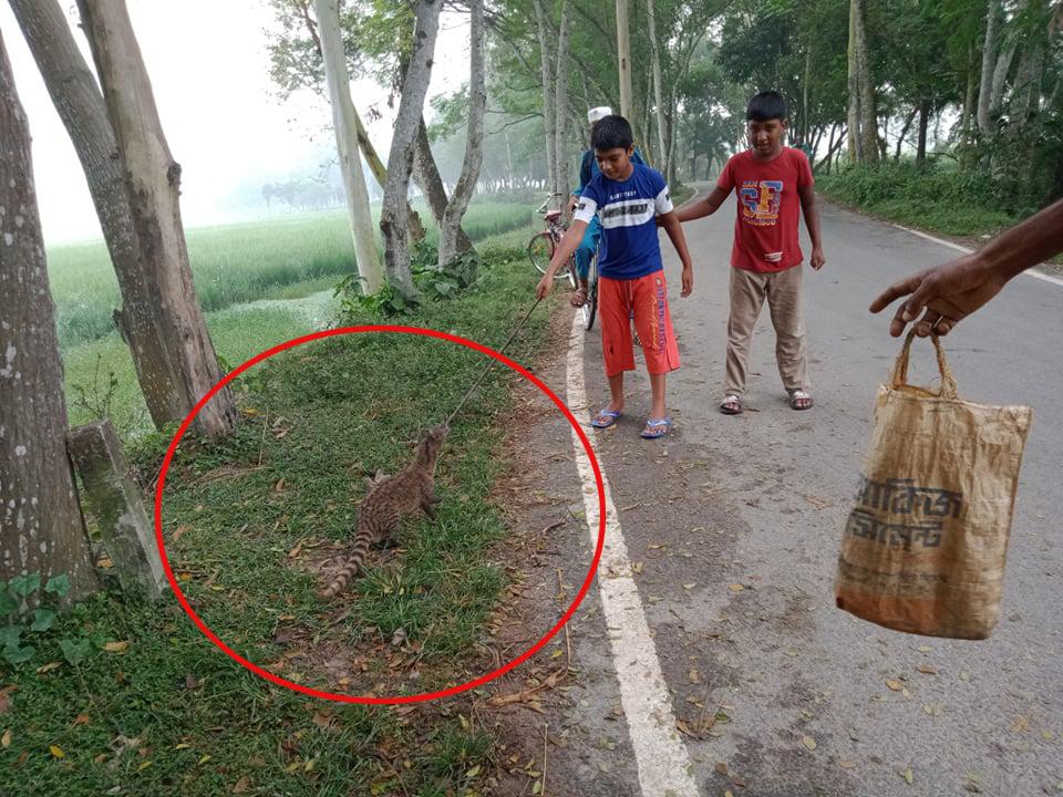 কালীগঞ্জে মাছ ধরার জালে আটকে গিয়ে ২ টি বিলুপ্তপ্রায় প্রাণীর মৃত্যু